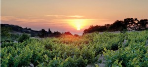 Wine Routes Cyprus